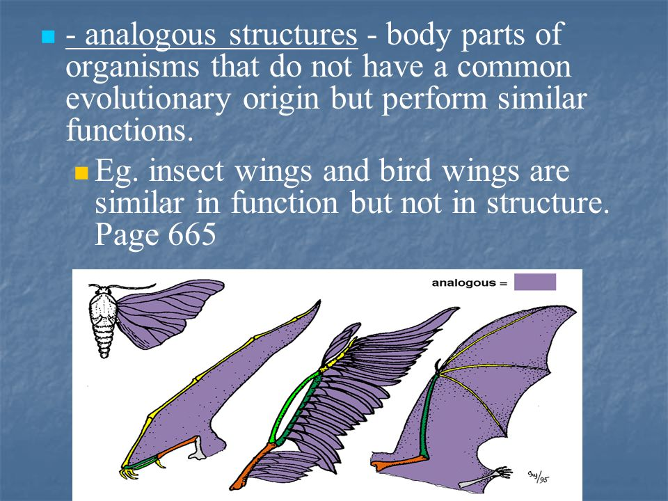 - analogous structures - body parts of organisms that do not have a common evolutionary origin but perform similar functions.