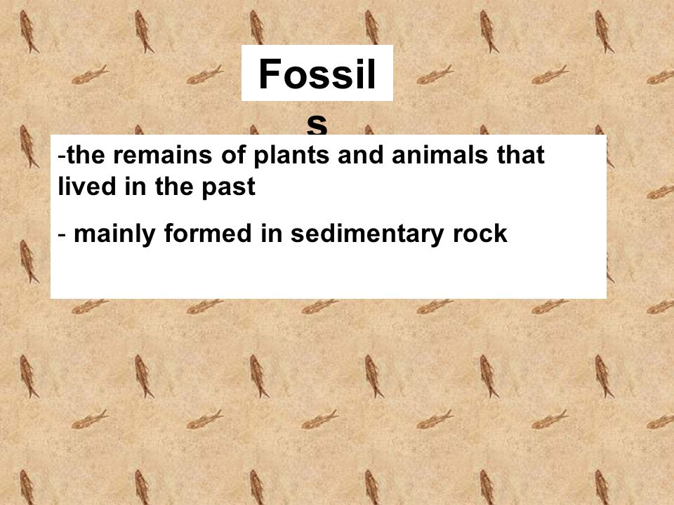 Fossil s -the remains of plants and animals that lived in the past - mainly formed in sedimentary rock