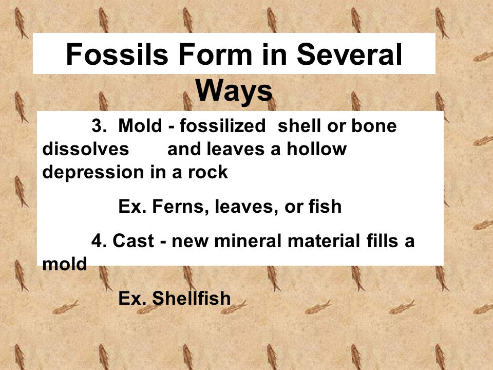 Fossils Form in Several Ways 3. Mold - fossilized shell or bone dissolves and leaves a hollow depression in a rock Ex. Ferns, leaves, or fish 4. Cast