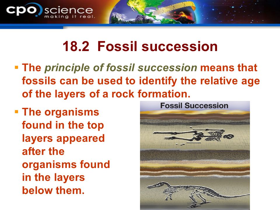 18.2 Fossil succession The principle of fossil succession means that fossils can be used to identify the relative age of the layers of a rock formation.