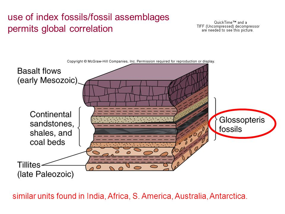 similar units found in India, Africa, S. America, Australia, Antarctica. use of index fossils/fossil assemblages permits global correlation