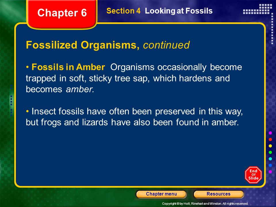Copyright © by Holt, Rinehart and Winston. All rights reserved. ResourcesChapter menu Fossilized Organisms, continued Fossils in Amber Organisms occas