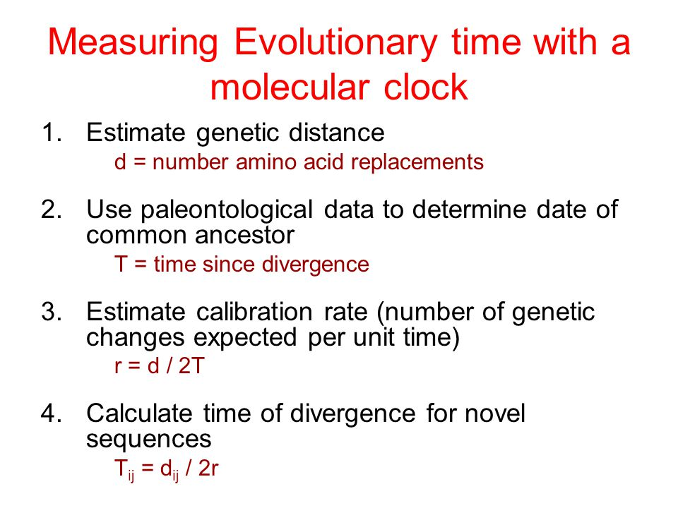 Measuring Evolutionary time with a molecular clock 1.Estimate genetic distance d = number amino acid replacements 2.Use paleontological data to determ