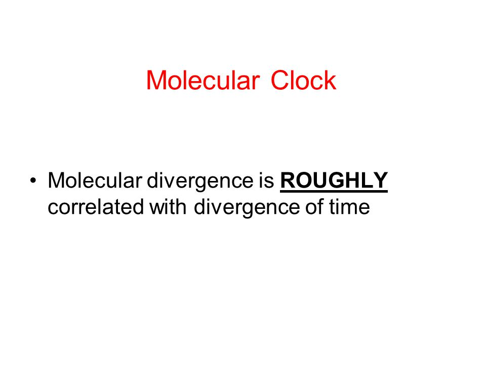 Molecular Clock Molecular divergence is ROUGHLY correlated with divergence of time