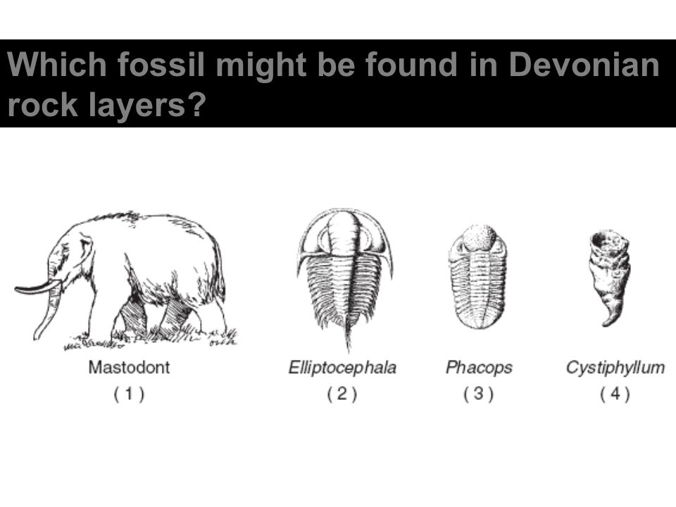 Which fossil might be found in Devonian rock layers?