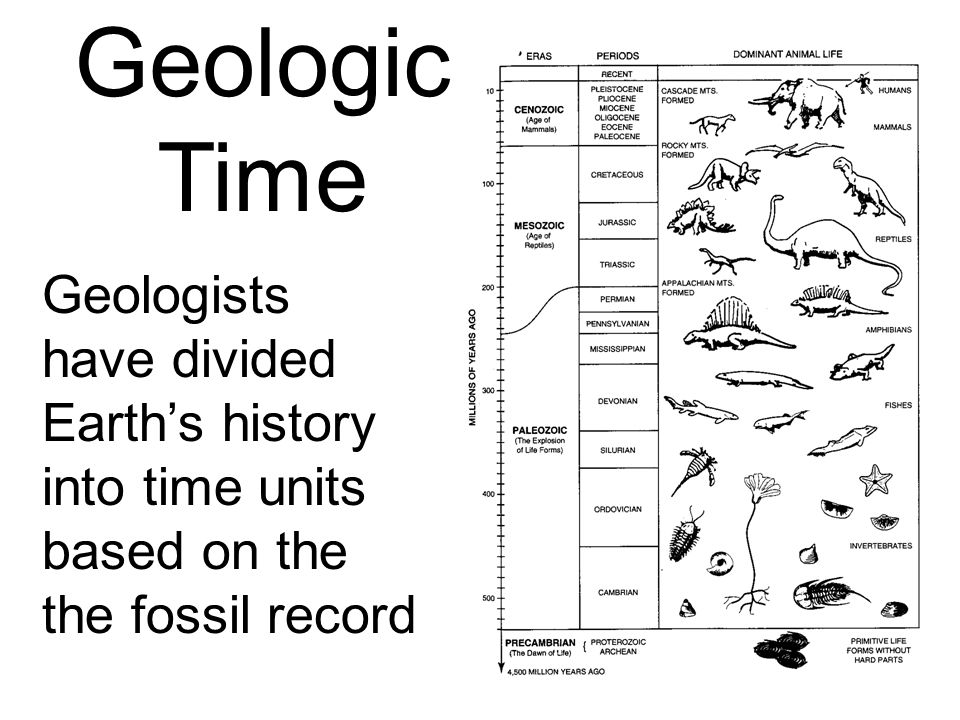 6 A study of the fossil record shows –A great variety of plants, animals, and simpler life forms have lived on Earth in the past –That life forms have evolved through time –Most life forms of the geologic past have become extinct