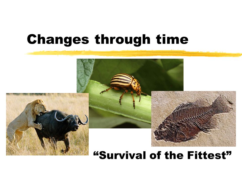 Changes through time Survival of the Fittest