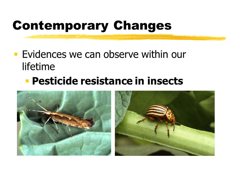Contemporary Changes Evidences we can observe within our lifetime Pesticide resistance in insects