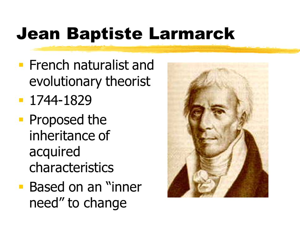 Jean Baptiste Larmarck French naturalist and evolutionary theorist 1744-1829 Proposed the inheritance of acquired characteristics Based on an inner ne