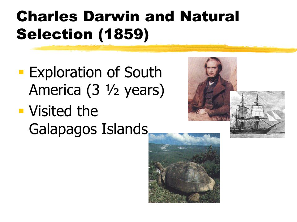 Charles Darwin and Natural Selection (1859) Exploration of South America (3 ½ years) Visited the Galapagos Islands