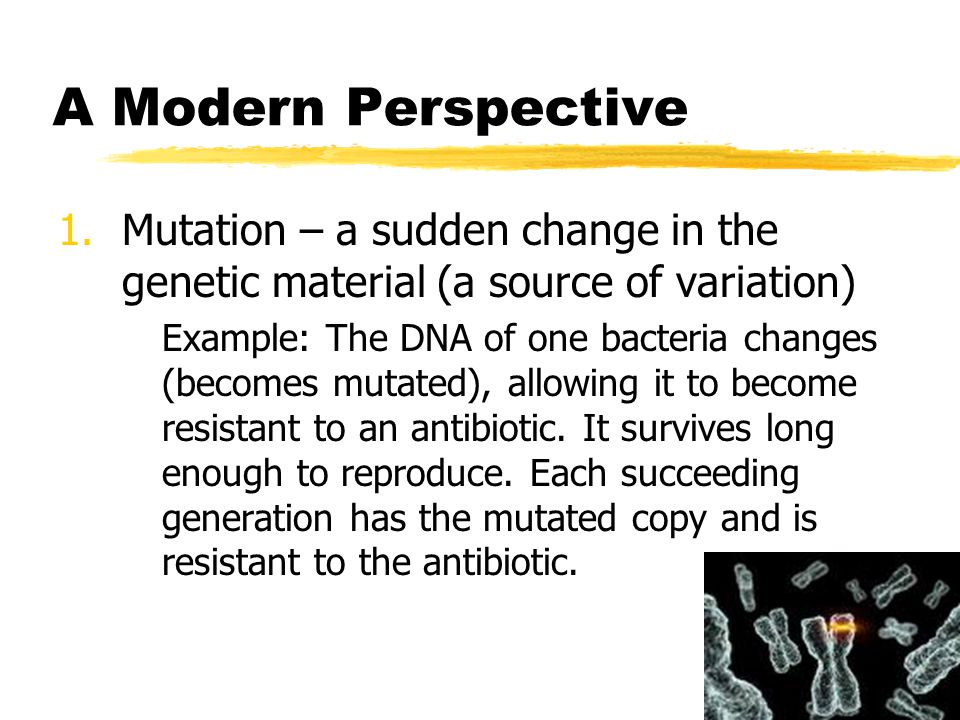 A Modern Perspective 1.Mutation – a sudden change in the genetic material (a source of variation) Example: The DNA of one bacteria changes (becomes mu