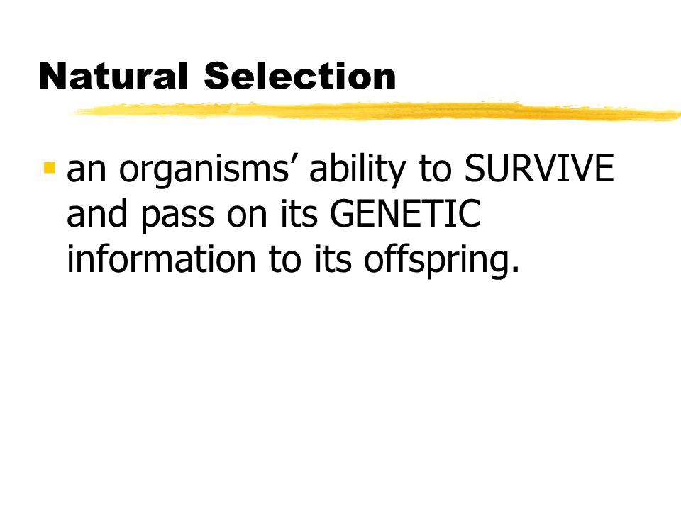 Natural Selection an organisms ability to SURVIVE and pass on its GENETIC information to its offspring.