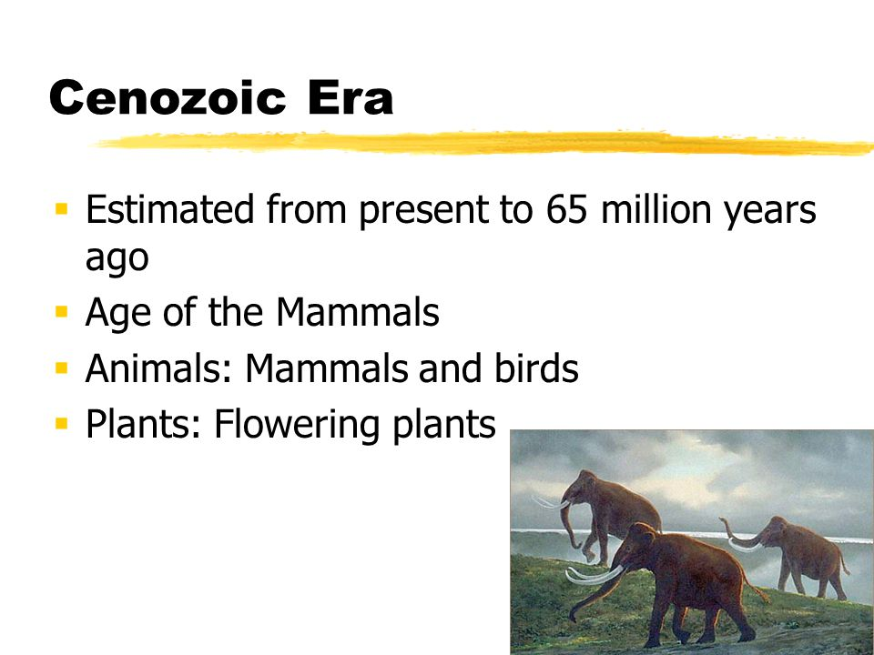 Cenozoic Era Estimated from present to 65 million years ago Age of the Mammals Animals: Mammals and birds Plants: Flowering plants