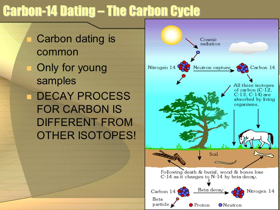 Carbon-14 Dating – The Carbon Cycle Carbon dating is common Only for young samples DECAY PROCESS FOR CARBON IS DIFFERENT FROM OTHER ISOTOPES!