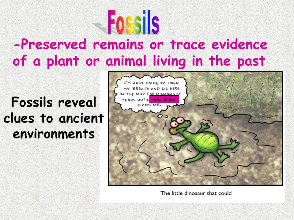 Example: The amount of Carbon-14 remaining in a fossil is 0.5 grams.