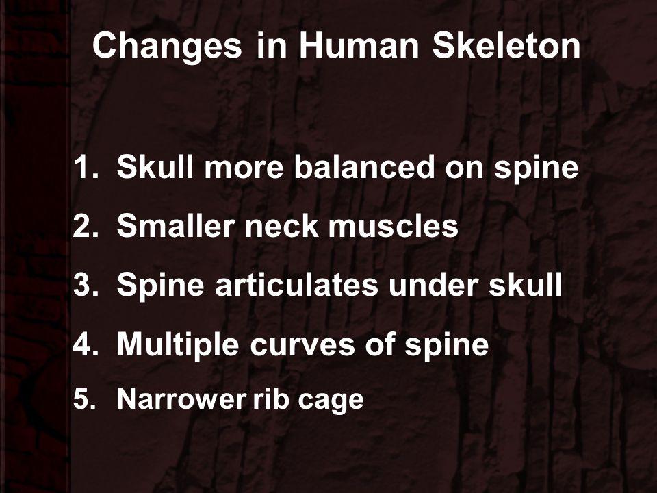 Hominoid Comparative Anatomy