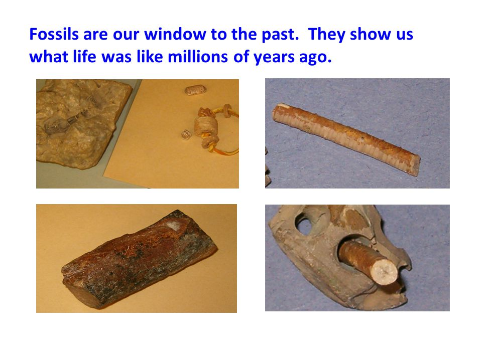 Fossils are our window to the past. They show us what life was like millions of years ago.