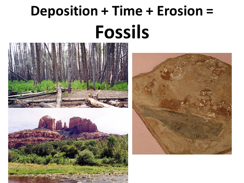 Deposition + Time + Erosion = Fossils