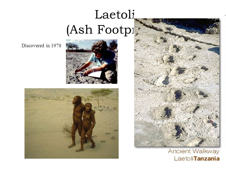 Laetoli (Ash Footprints) Discovered in 1978