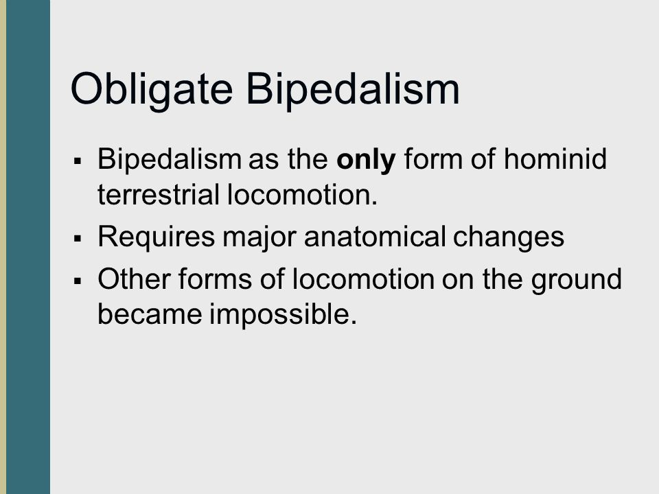 Obligate Bipedalism Bipedalism as the only form of hominid terrestrial locomotion. Requires major anatomical changes Other forms of locomotion on the