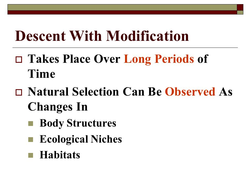 Descent With Modification Takes Place Over Long Periods of Time Natural Selection Can Be Observed As Changes In Body Structures Ecological Niches Habi