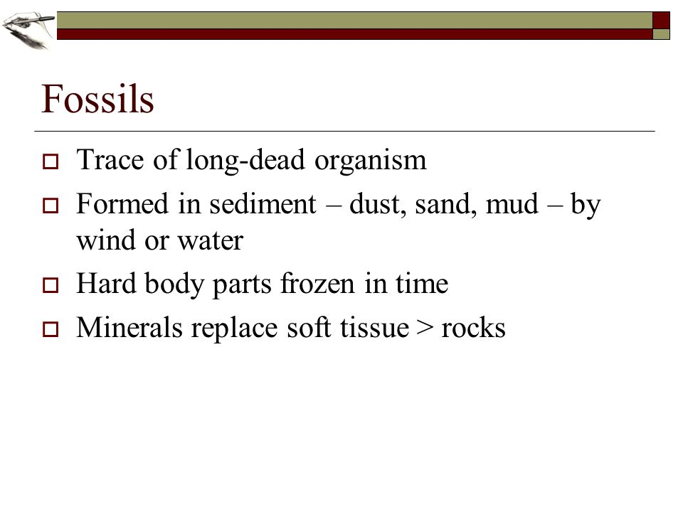 Fossils Trace of long-dead organism Formed in sediment – dust, sand, mud – by wind or water Hard body parts frozen in time Minerals replace soft tissu