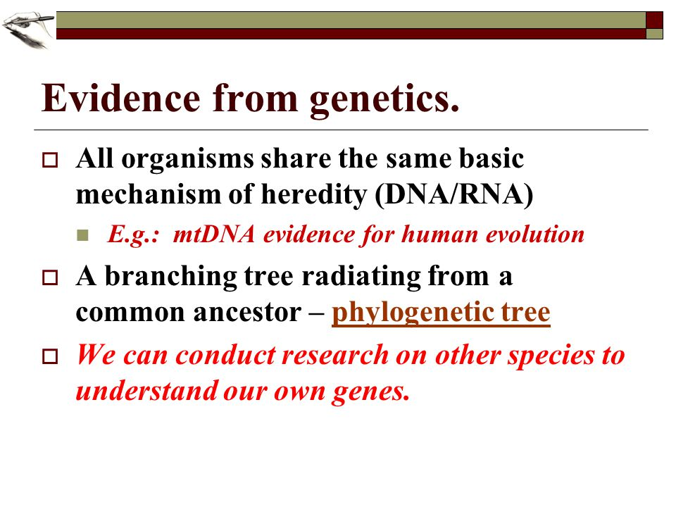 Evidence from genetics. All organisms share the same basic mechanism of heredity (DNA/RNA) E.g.: mtDNA evidence for human evolution A branching tree r