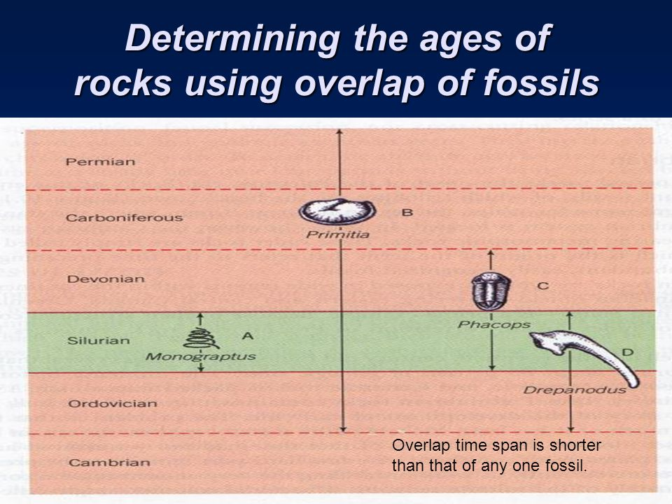 Determining the ages of rocks using overlap of fossils Overlap time span is shorter than that of any one fossil.
