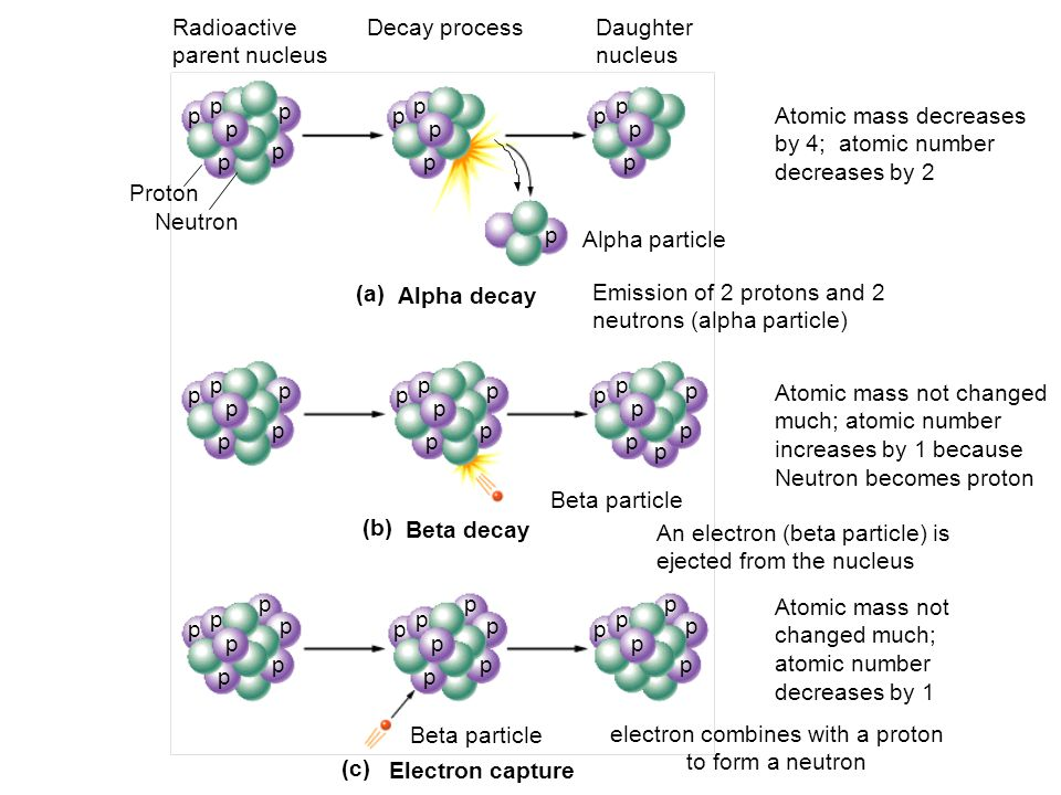 p p p Atomic mass not changed much; atomic number increases by 1 because Neutron becomes proton (b) Beta decay Beta particle Radioactive parent nucleu