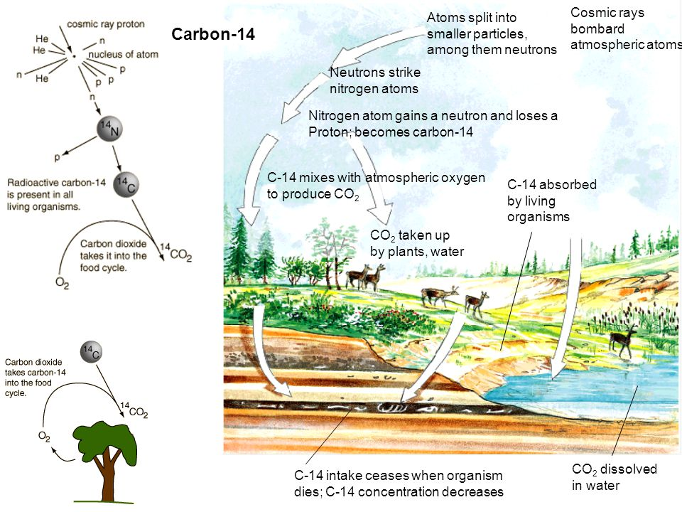 Atoms split into smaller particles, among them neutrons Neutrons strike nitrogen atoms Nitrogen atom gains a neutron and loses a Proton; becomes carbo
