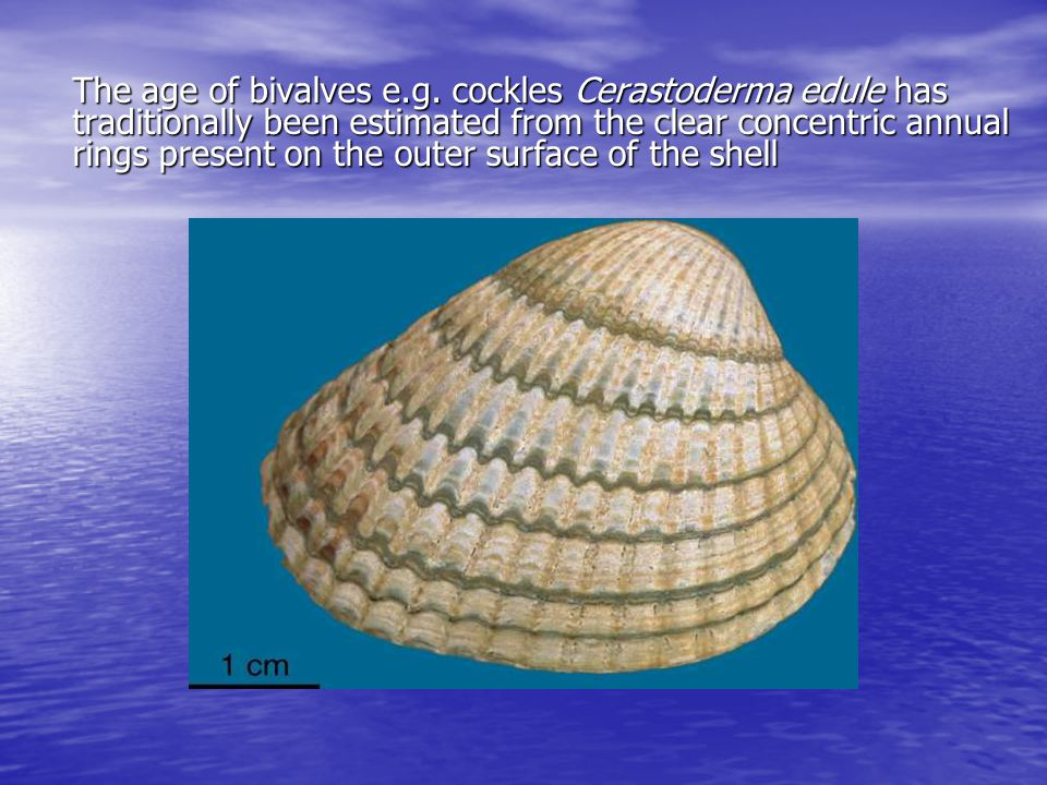 The age of bivalves e.g.