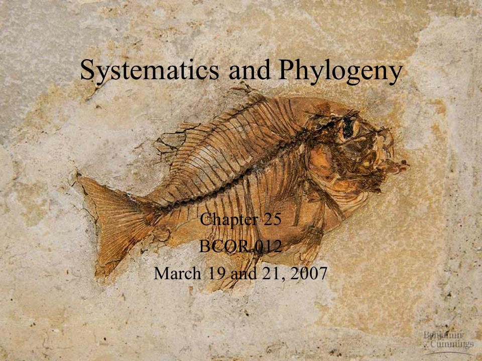 Systematics and Phylogeny Chapter 25 BCOR 012 March 19 and 21, 2007