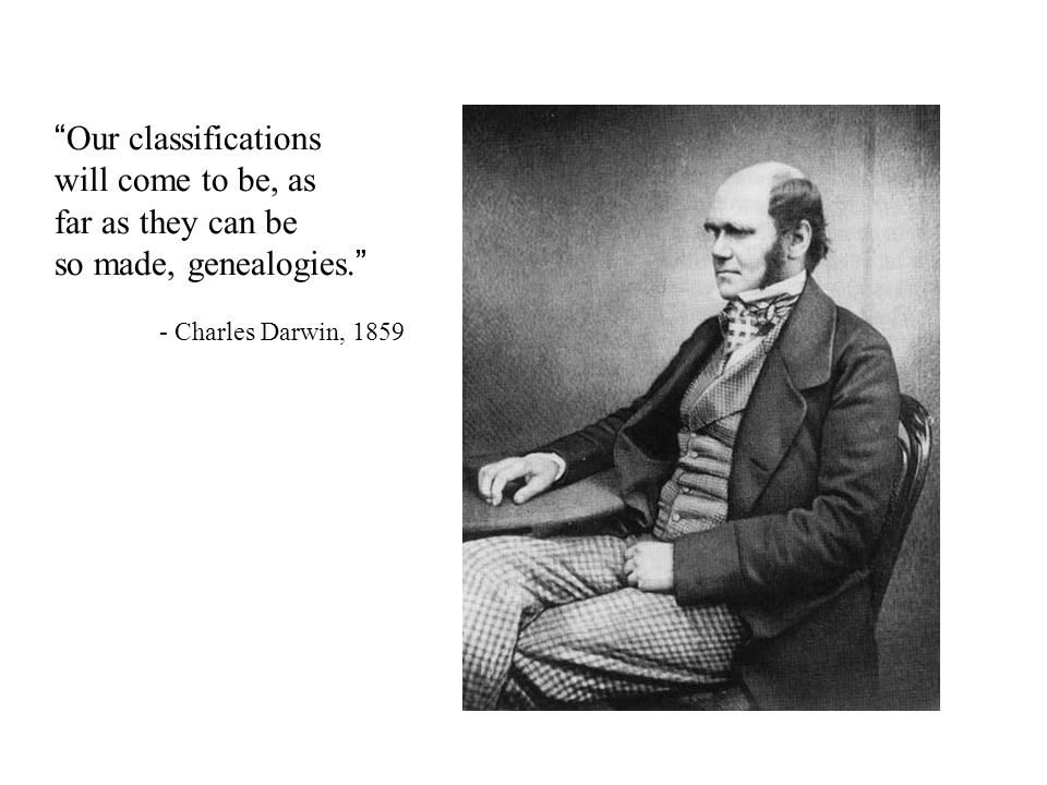 Our classifications will come to be, as far as they can be so made, genealogies. - Charles Darwin, 1859