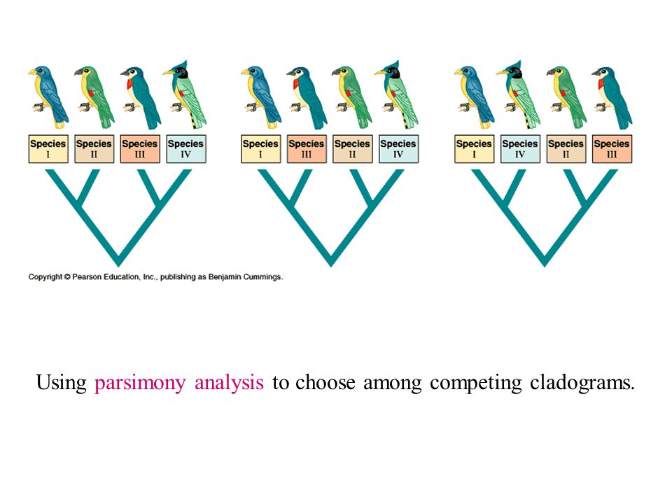 Using parsimony analysis to choose among competing cladograms.
