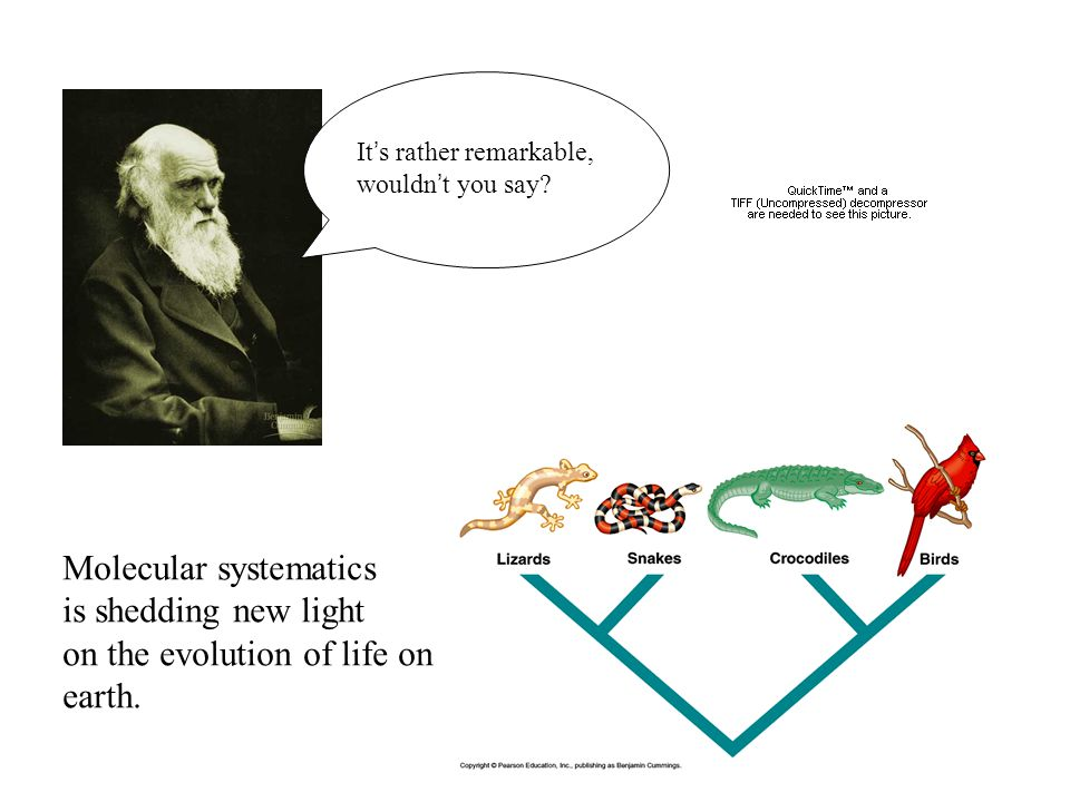 It s rather remarkable, wouldn t you say? Molecular systematics is shedding new light on the evolution of life on earth.