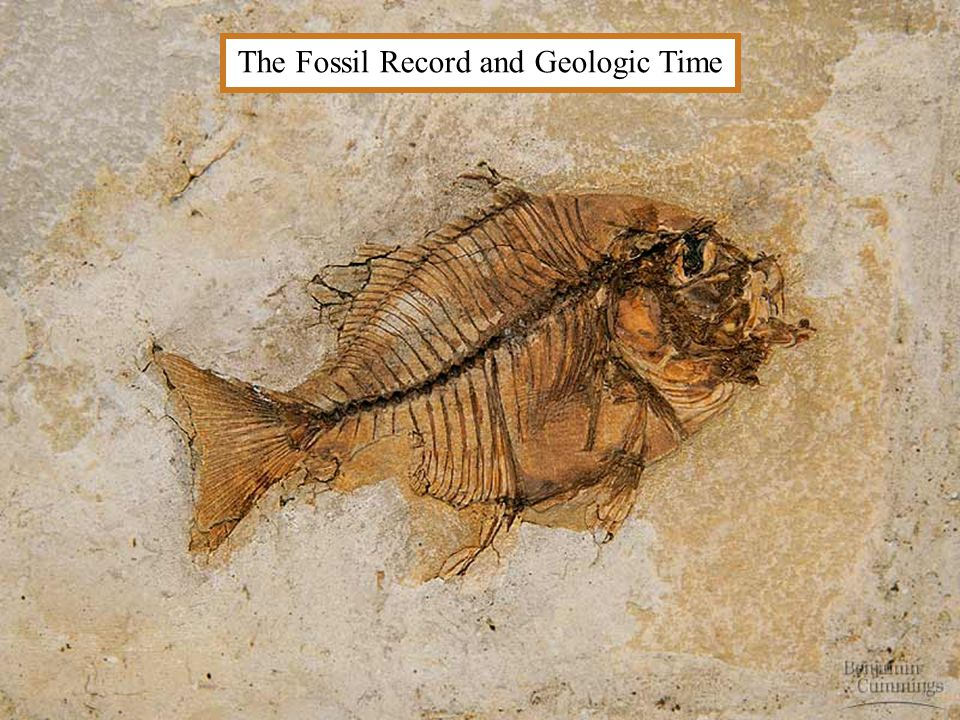 The Fossil Record and Geologic Time