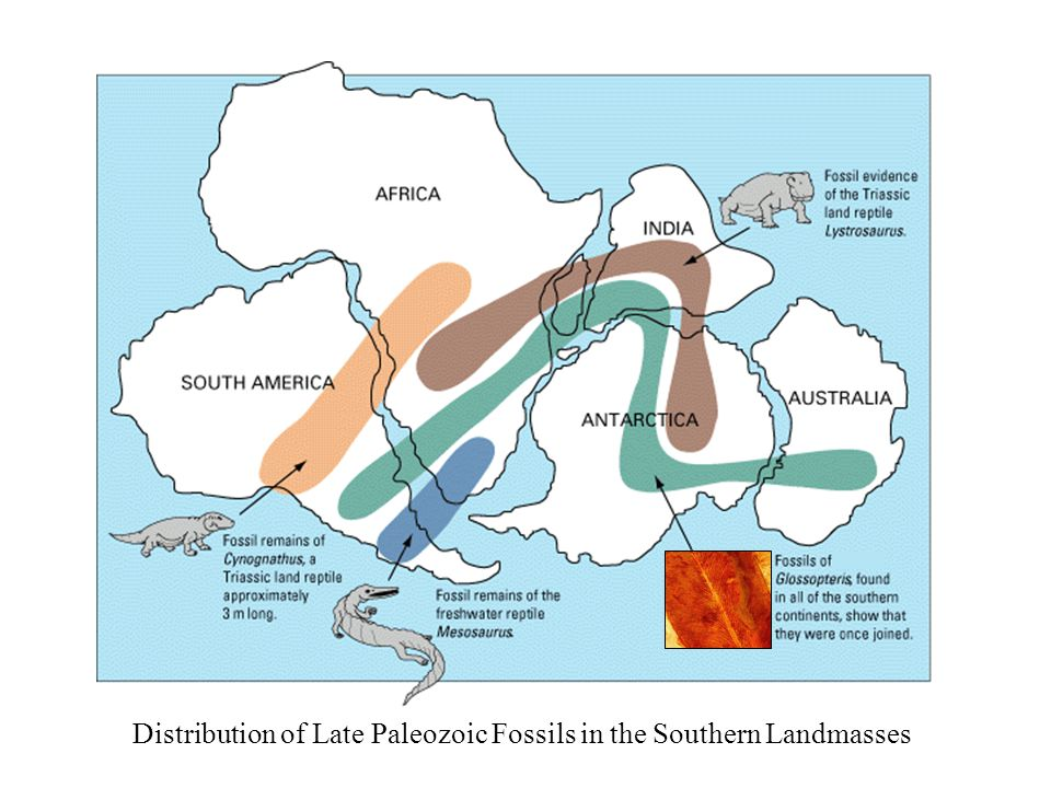 Distribution of Late Paleozoic Fossils in the Southern Landmasses