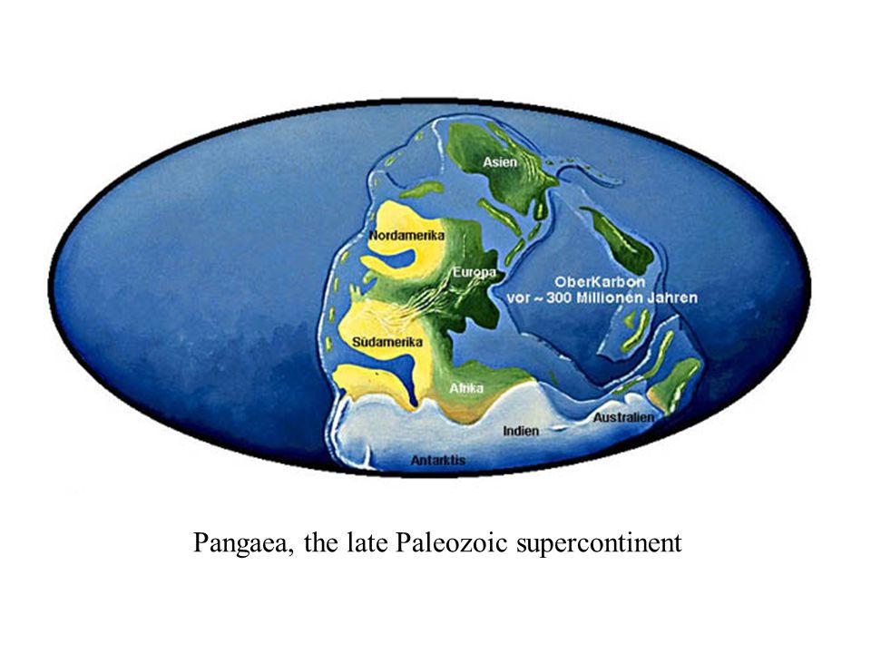 Pangaea, the late Paleozoic supercontinent