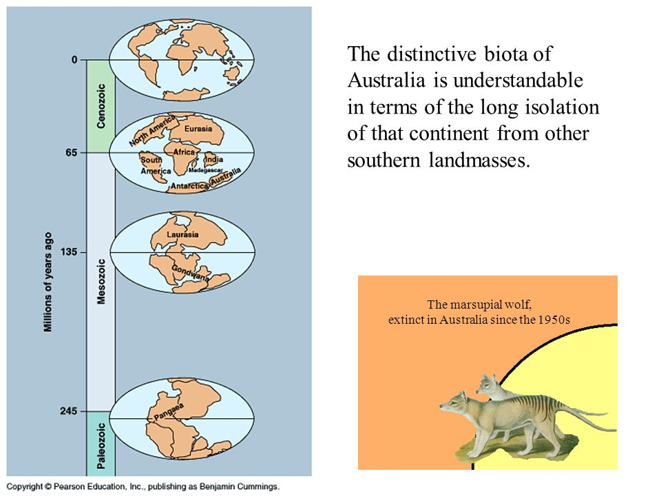 The distinctive biota of Australia is understandable in terms of the long isolation of that continent from other southern landmasses. The marsupial wo