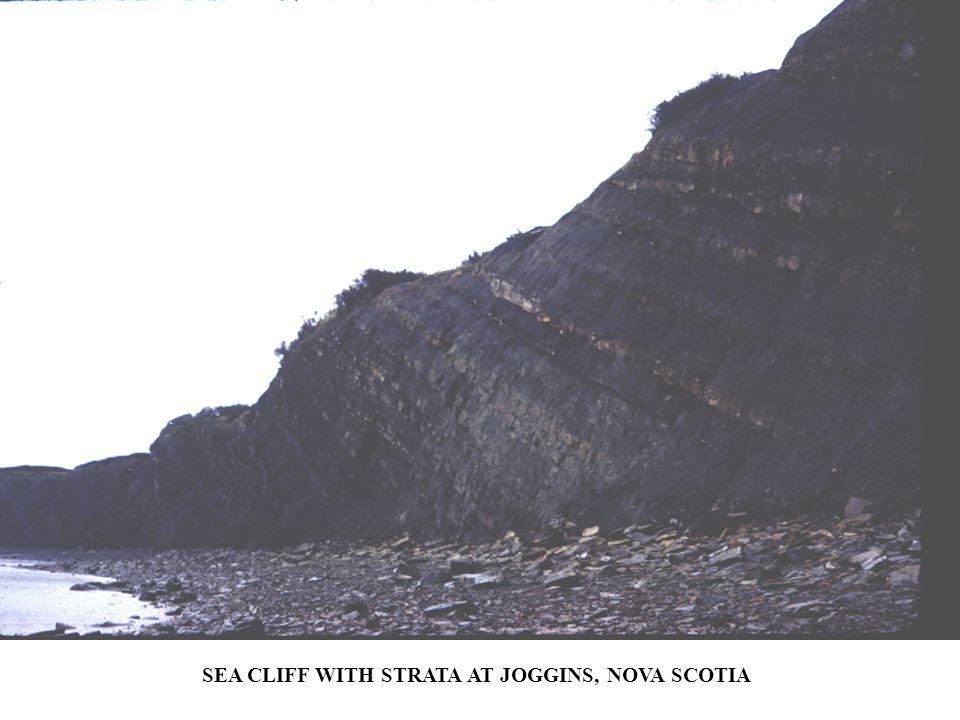 SEA CLIFF WITH STRATA AT JOGGINS, NOVA SCOTIA