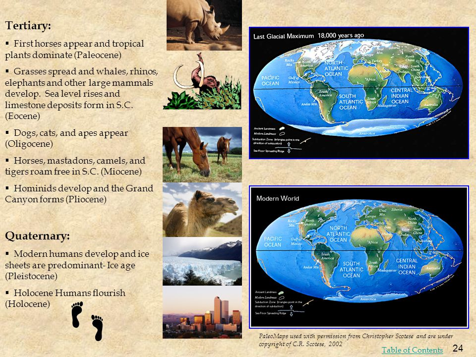 Tertiary: First horses appear and tropical plants dominate (Paleocene) Grasses spread and whales, rhinos, elephants and other large mammals develop. S
