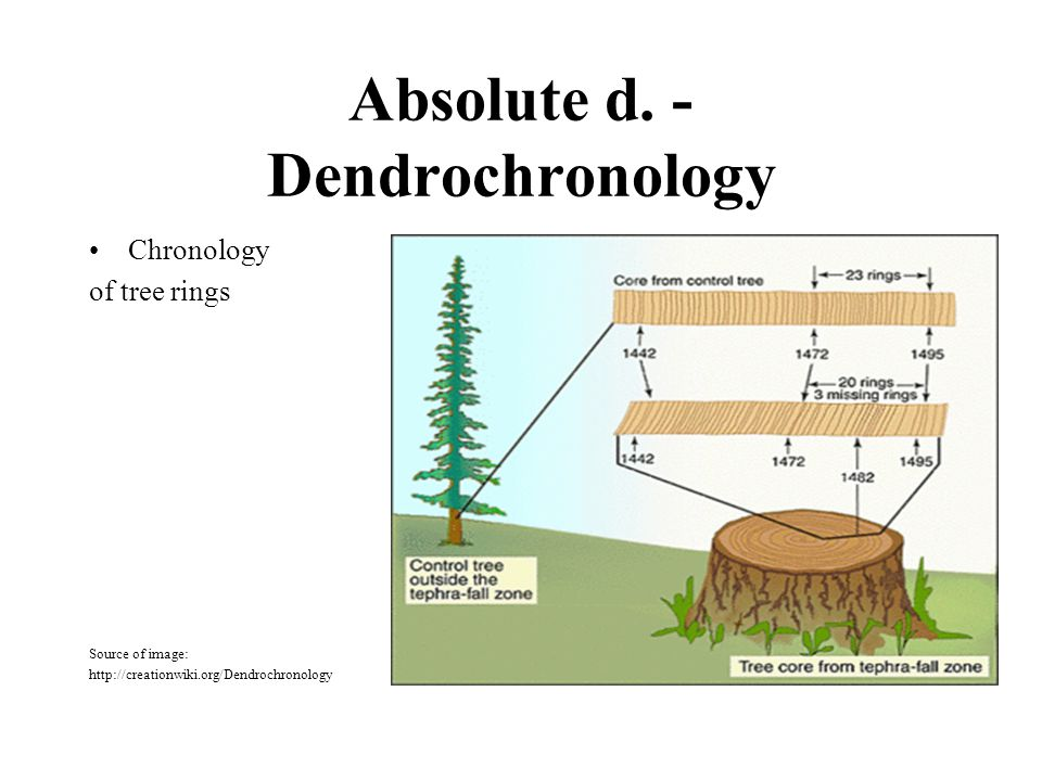 Absolute d. - Dendrochronology Chronology of tree rings Source of image: http://creationwiki.org/Dendrochronology