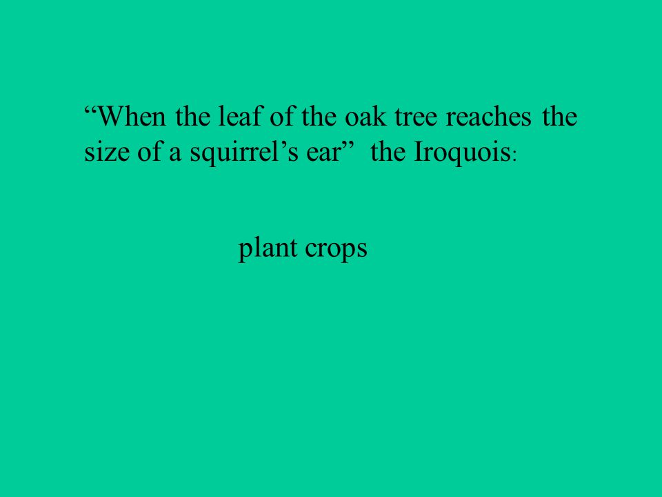 When the leaf of the oak tree reaches the size of a squirrels ear the Iroquois : plant crops