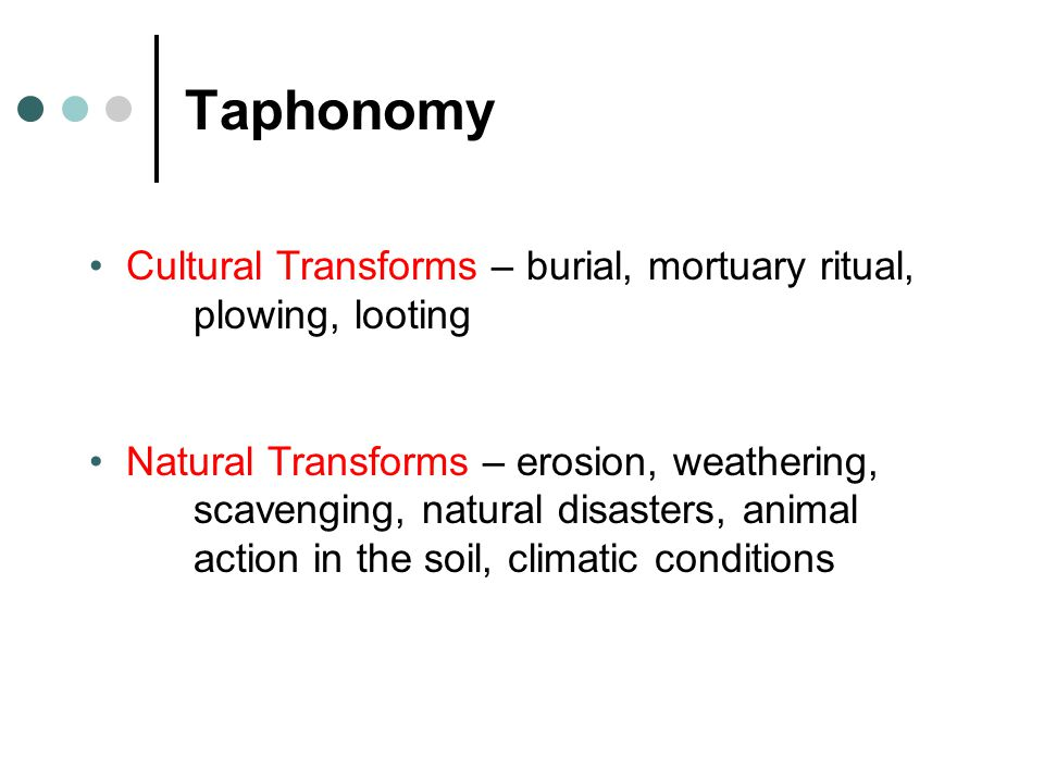 Taphonomy Cultural Transforms – burial, mortuary ritual, plowing, looting Natural Transforms – erosion, weathering, scavenging, natural disasters, ani