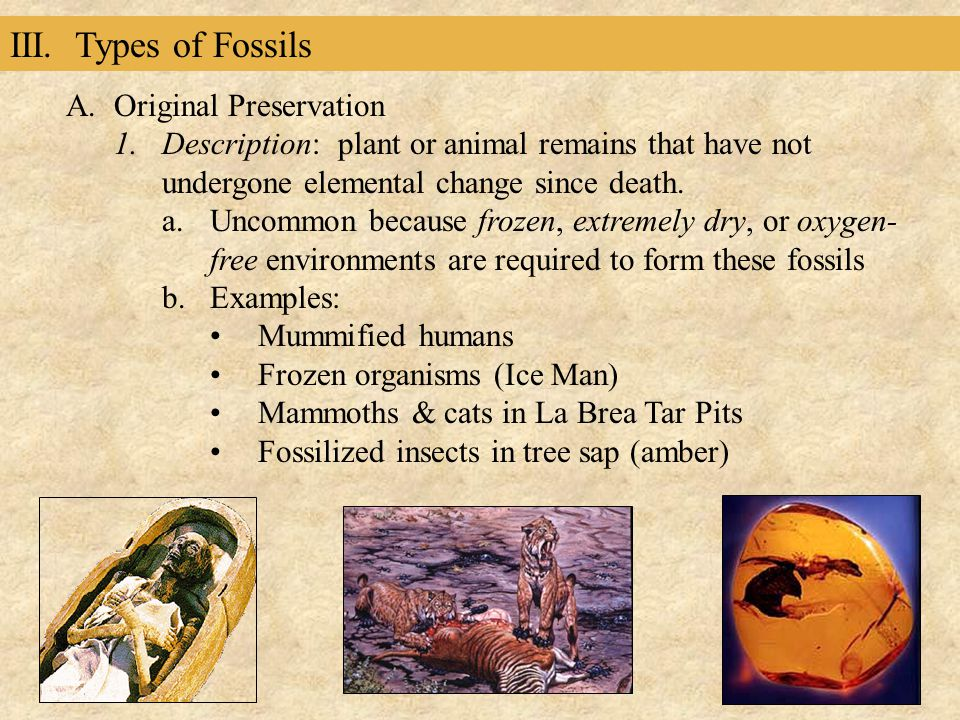 III. Types of Fossils A.Original Preservation 1.Description: plant or animal remains that have not undergone elemental change since death. a.Uncommon