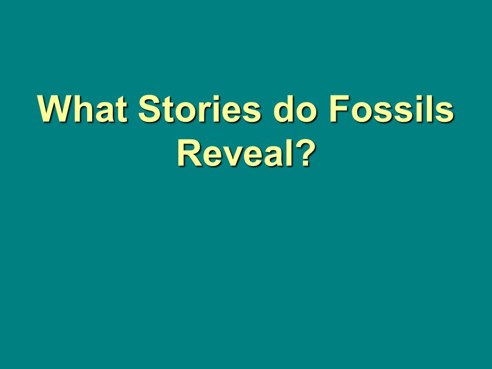 What Stories do Fossils Reveal