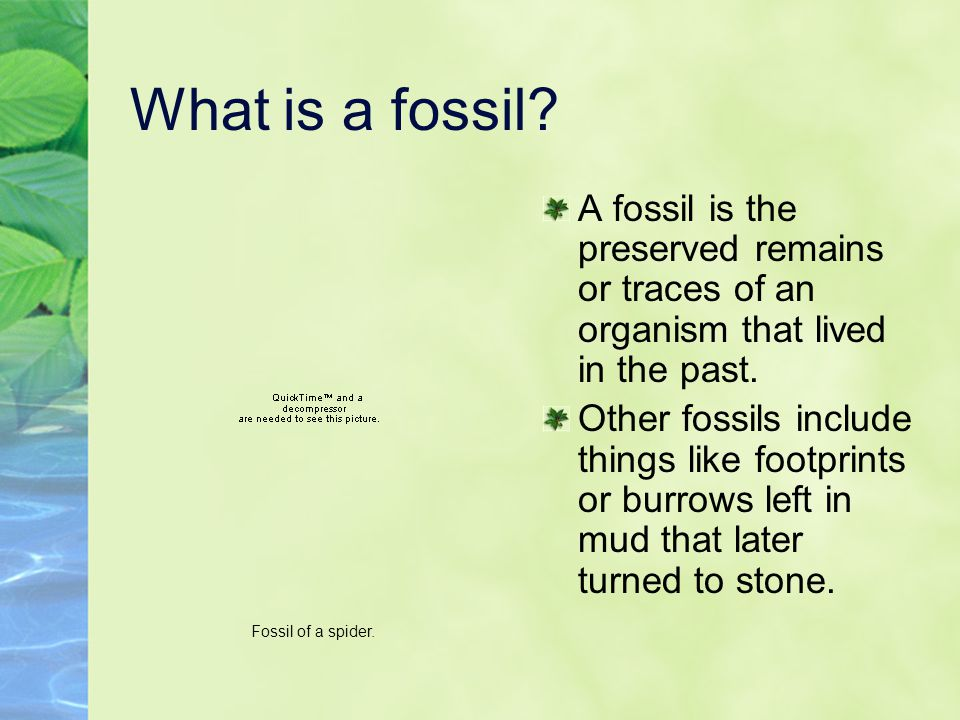 How Do Fossils Form.Fossils can form from bones, tooth, shell, or other part of an organism.