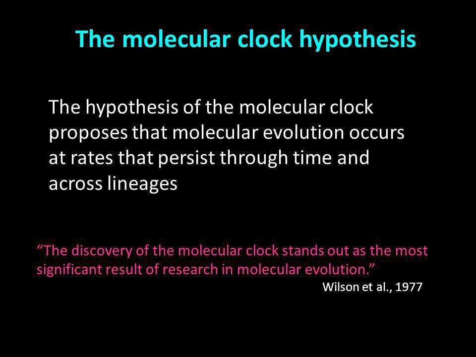 The molecular clock hypothesis The hypothesis of the molecular clock proposes that molecular evolution occurs at rates that persist through time and a