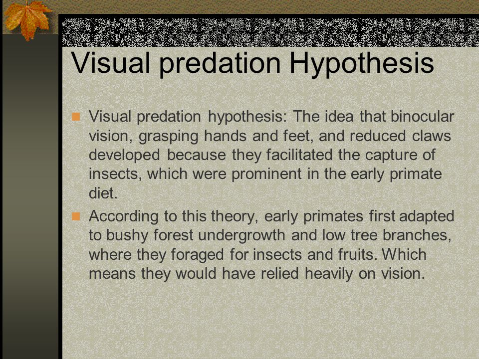 Visual predation Hypothesis Visual predation hypothesis: The idea that binocular vision, grasping hands and feet, and reduced claws developed because