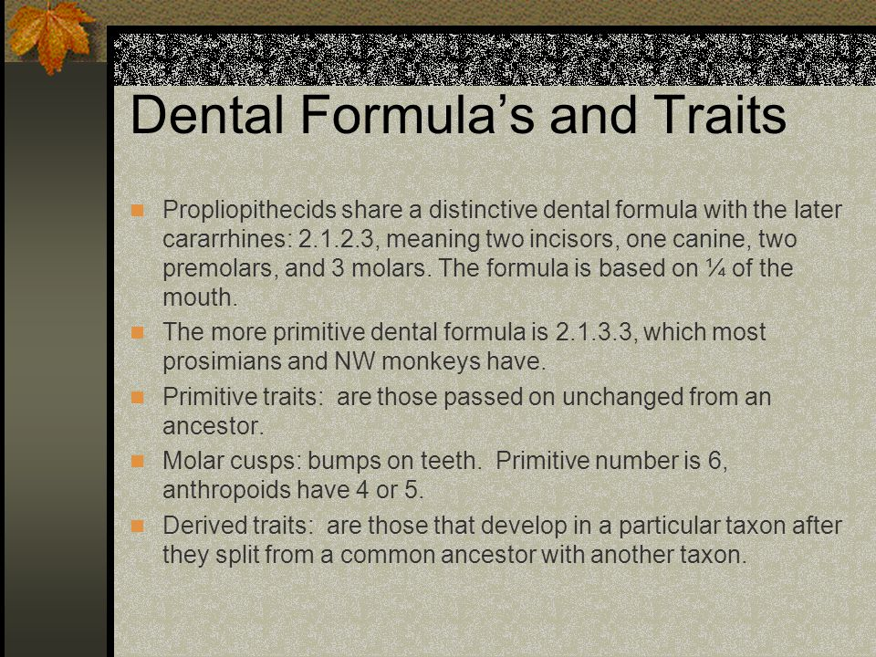 Dental Formulas and Traits Propliopithecids share a distinctive dental formula with the later cararrhines: 2.1.2.3, meaning two incisors, one canine,